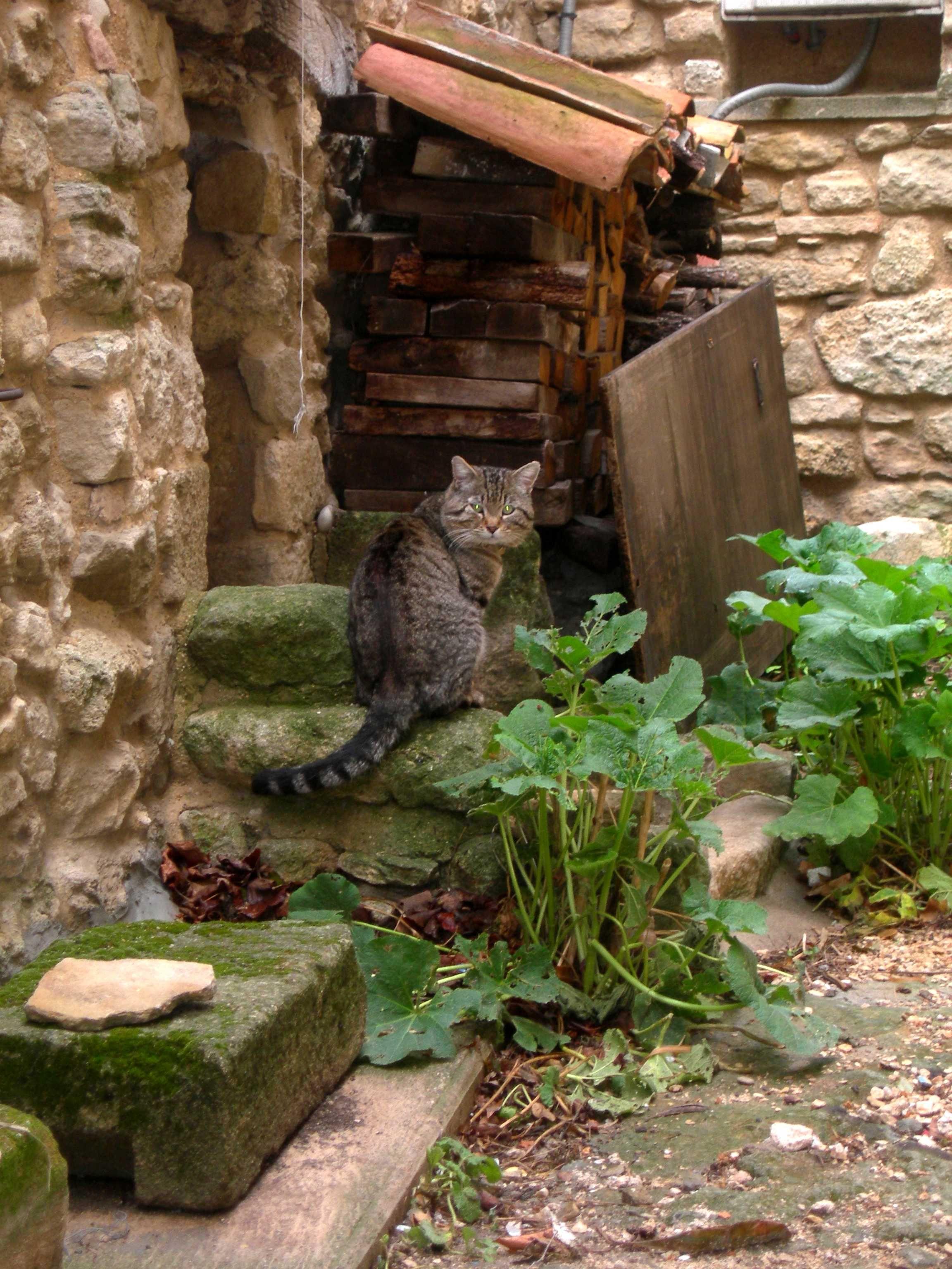 chat de campagne