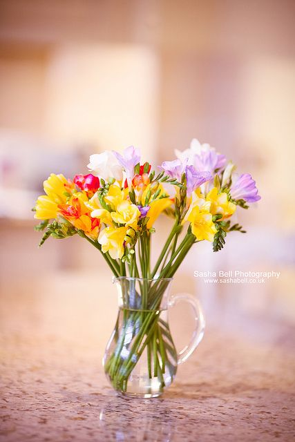 Sweet Freesias Day 163 365 Beautiful Blooms Freesia Flower Quotes