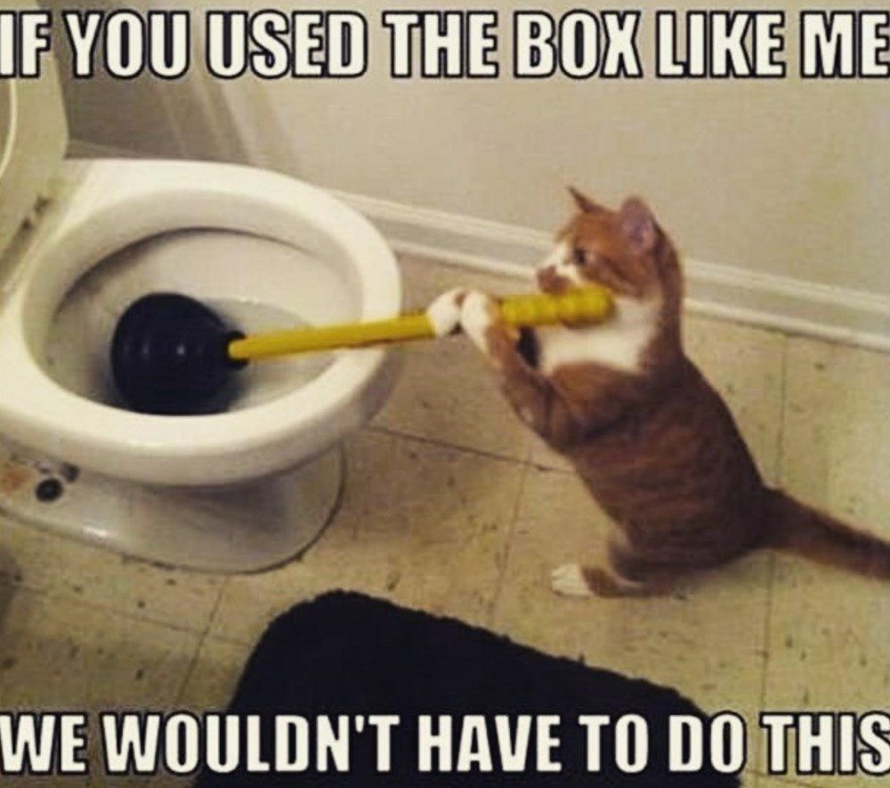 25 Memes About Cats And Dogs That Every Pet Owner Will Love Funny Cat Fails Funny Cats Funny Animal Pictures