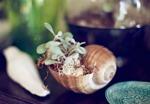 tiny tiny garden