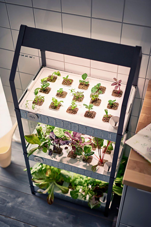 Fur Einen Gruneren Alltag Neues Hydrokultursystem Von Ikea In 2020 Mit Bildern Diy Hydroponik Gartnern Auf Kleinem Raum Hydrokultur Pflanzen