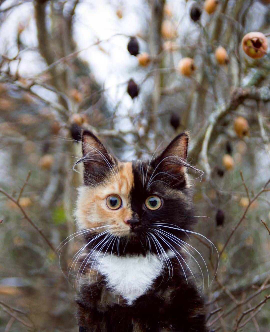 A Tortoiseshell Calico Cat Whose Adorable Face is