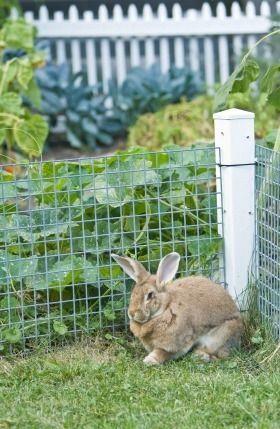 Fencing Your Vegetable Garden Gardens, Garden fencing and