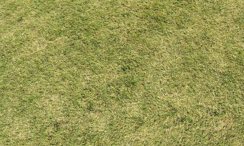 30 Free High Resolution Grass Textures Texture Photoshop Design