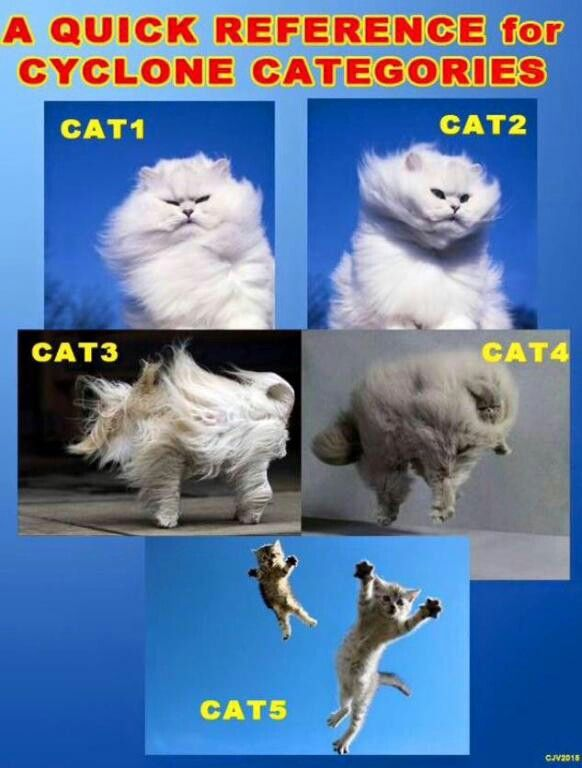 Cat 1 to 5 cyclone chart Catz and Critterz Funny, Cats, Florida