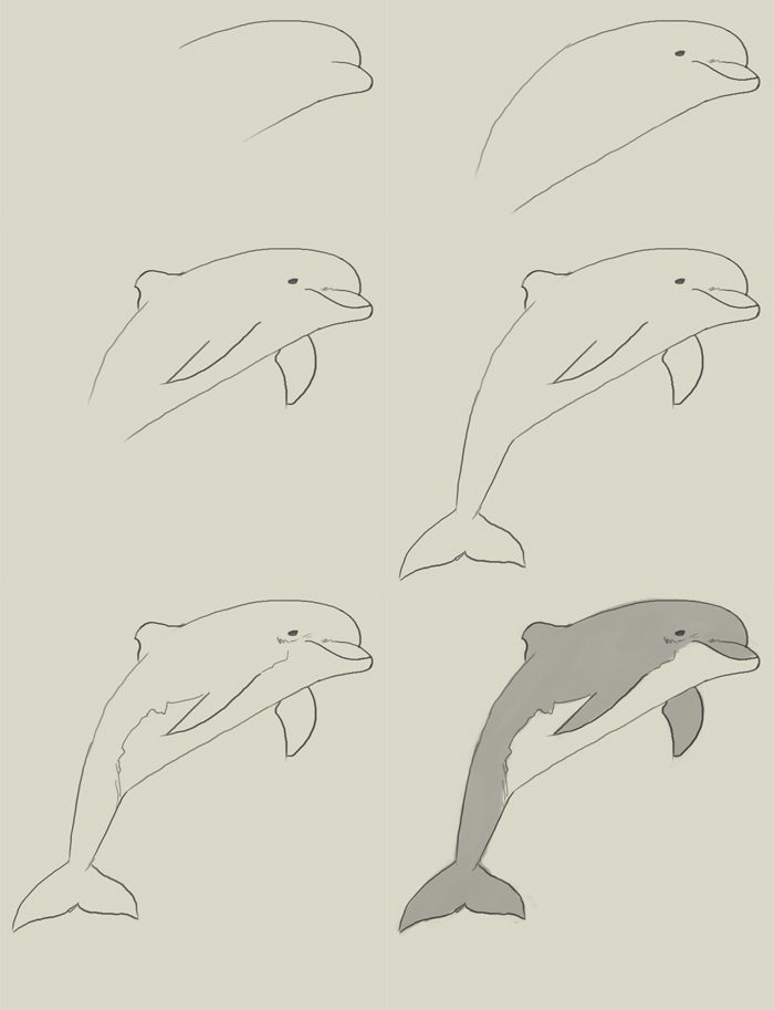 How To Draw Dolphin Dauphin Dessin Dessins Faciles Dessin Fleur