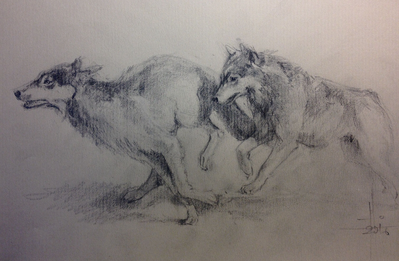Dibujo A Lápiz Grafito De Dos Lobos Corriendo, Sobre