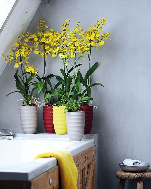Orqu deas aut ctonas flor del patito en macetas de - Macetas para orquideas ...