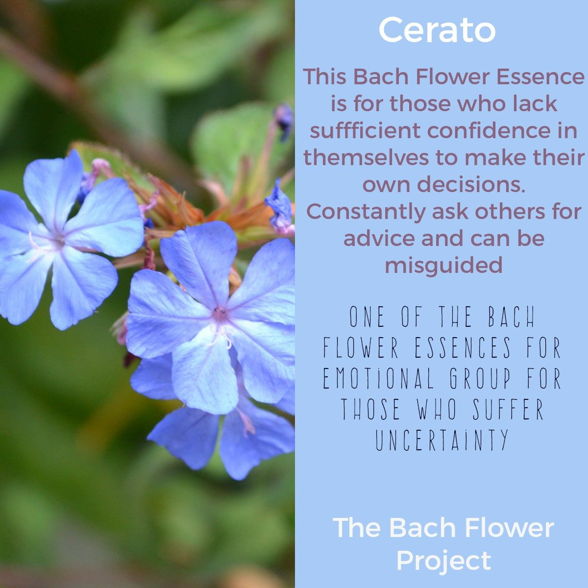 Cerato For Those Who Lack Sufficient Confidence In Themselves Bach Flower Remedies Bach Flowers Flower Essences Remedies