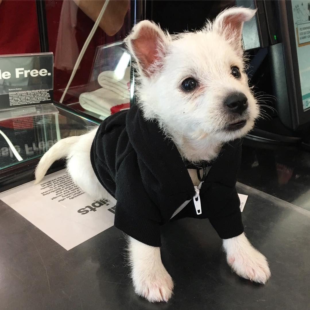 Keep your furry friends warm in our Flex Fleece Dog Zip Hoody! #AmericanApparel #MadeInUSA