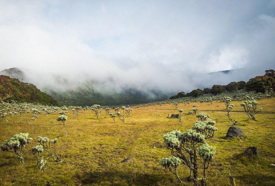 Edelweis Flowers Alun Alun Surya Kencana Gunung Gede Foto Oleh Teman Saya Mira Afianti Pemandangan Pegunungan Bunga