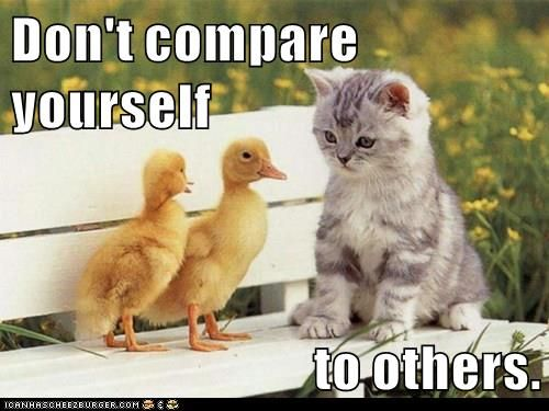 16f65e2d855ceed981cfa99b0529c738 growth mindset memes don't compare yourself to others growth,Compare Meme