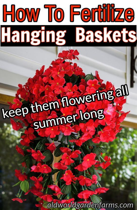 How To Fertilize Hanging Baskets To Keep Them Flowering All Summer! is part of Container gardening flowers, Vegetable garden raised beds, Plants for hanging baskets, Flower garden, Hanging flower baskets, Planting flowers - What is the best way to fertilize hanging baskets to keep them gorgeous all summer long  Find out our tops tips to keep your baskets blooming big!