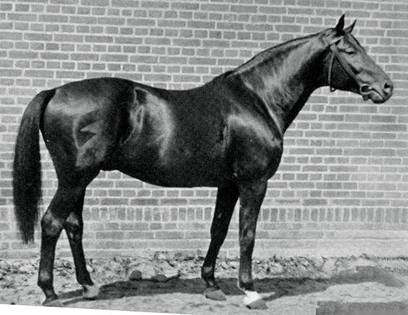 Russian Trakehner Ararad Id 35 Trakehner Horses Sport Horse
