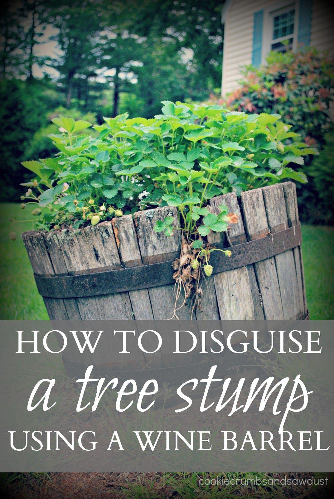 How To Disguise A Tree Stump Tree Stump Decor Tree Stump Tree
