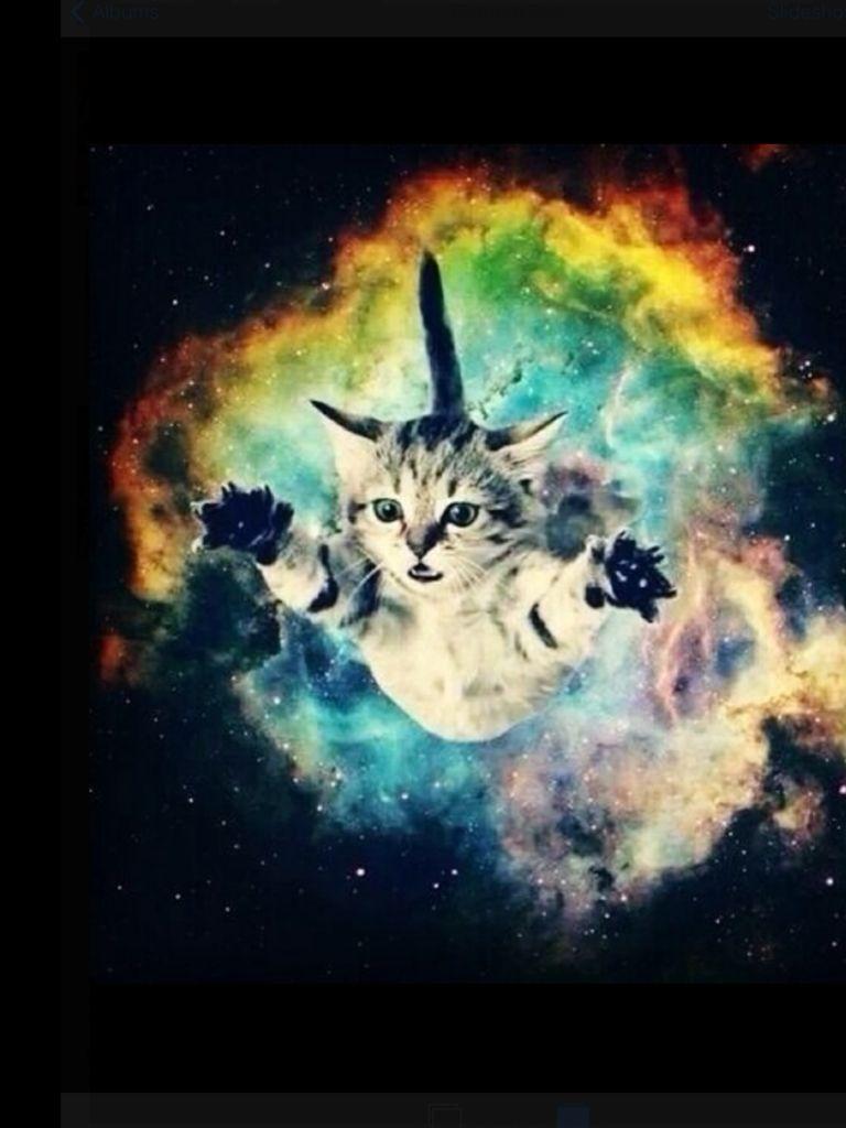 Cat galaxy cierra and mekenzie pinterest cat space - Space kitty wallpaper ...