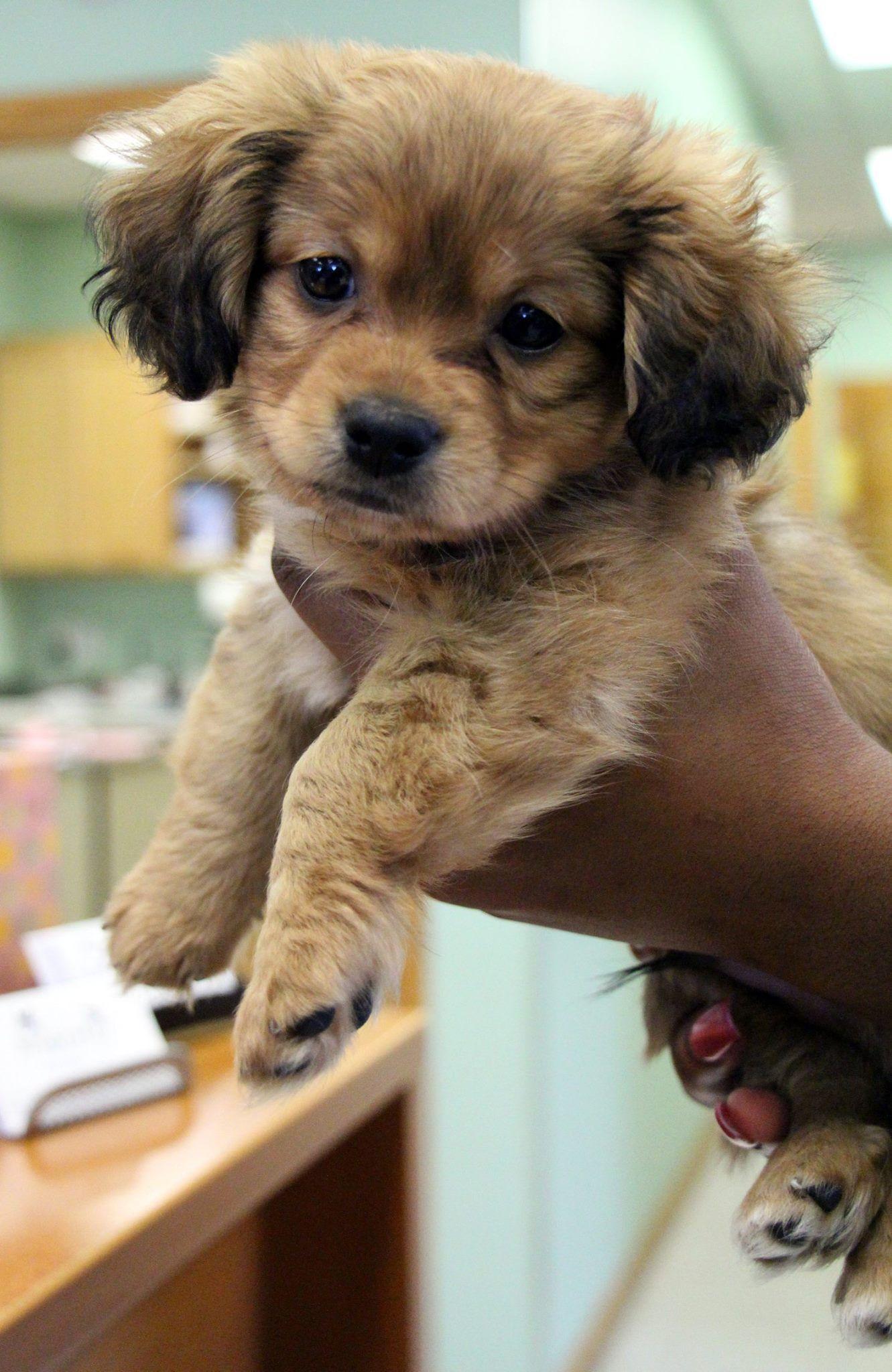 SportsVet AMC DogsOfPinterest Dogs Pet health care