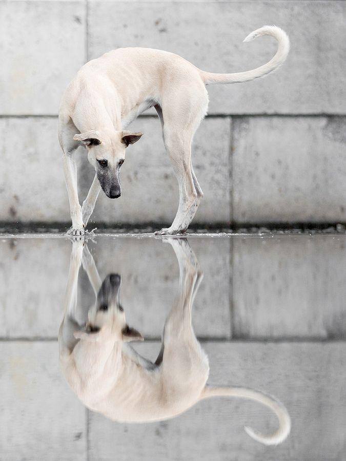 Haustierfotografie von Elke Vogelsang aka Wieselblitz #dogsphotography