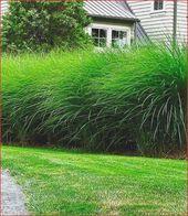 Garten Design: 26 Das Beste Von Sichtschutz Pflanzen Winterhart O25p  - Garten -... ,  #Beste... #sichtschutzpflanzen