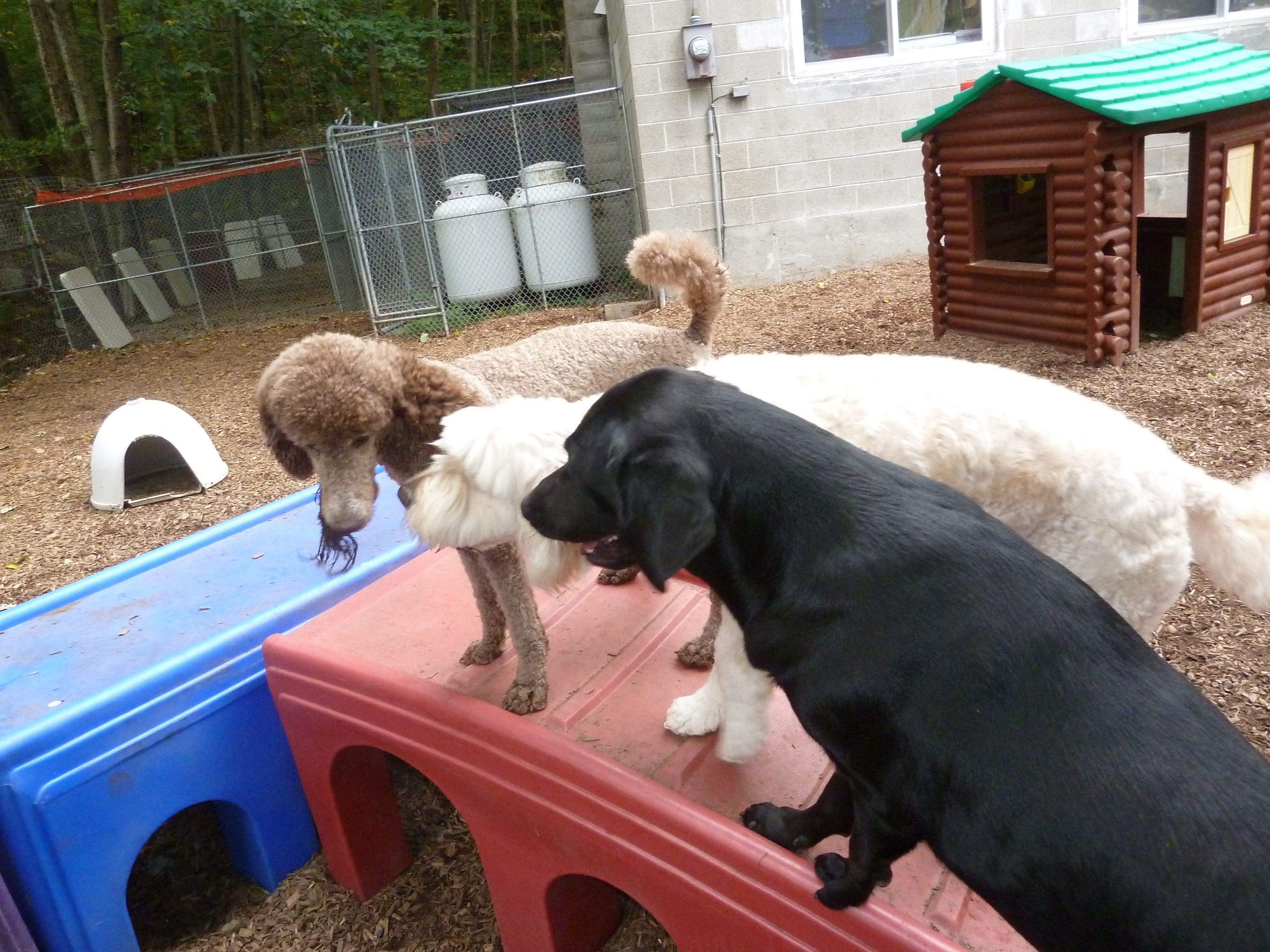 daycare huddle! Dog comparison, Dog daycare near me