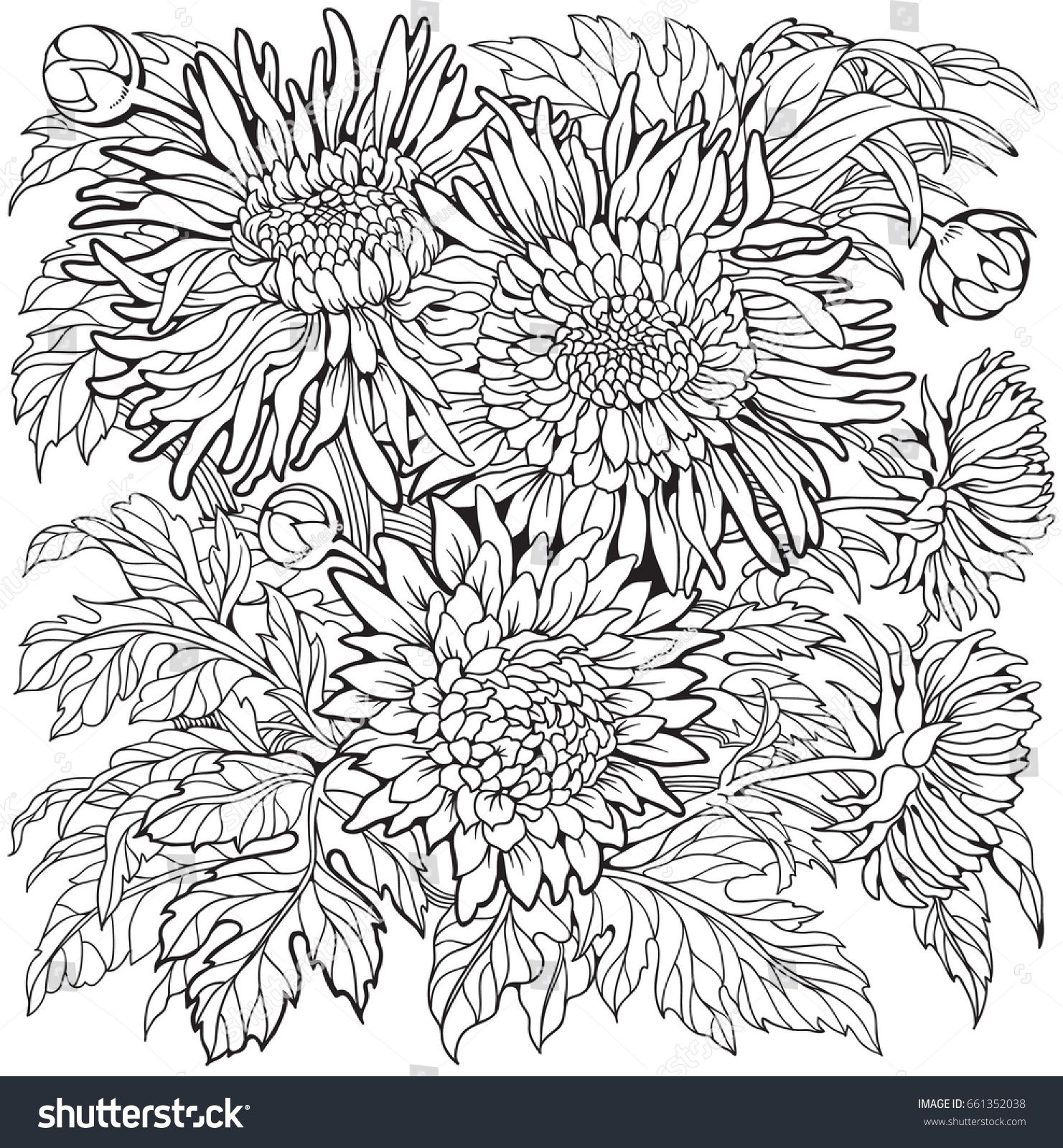 Stock Vector Aster Flowers Coloring Page Line Art Drawing