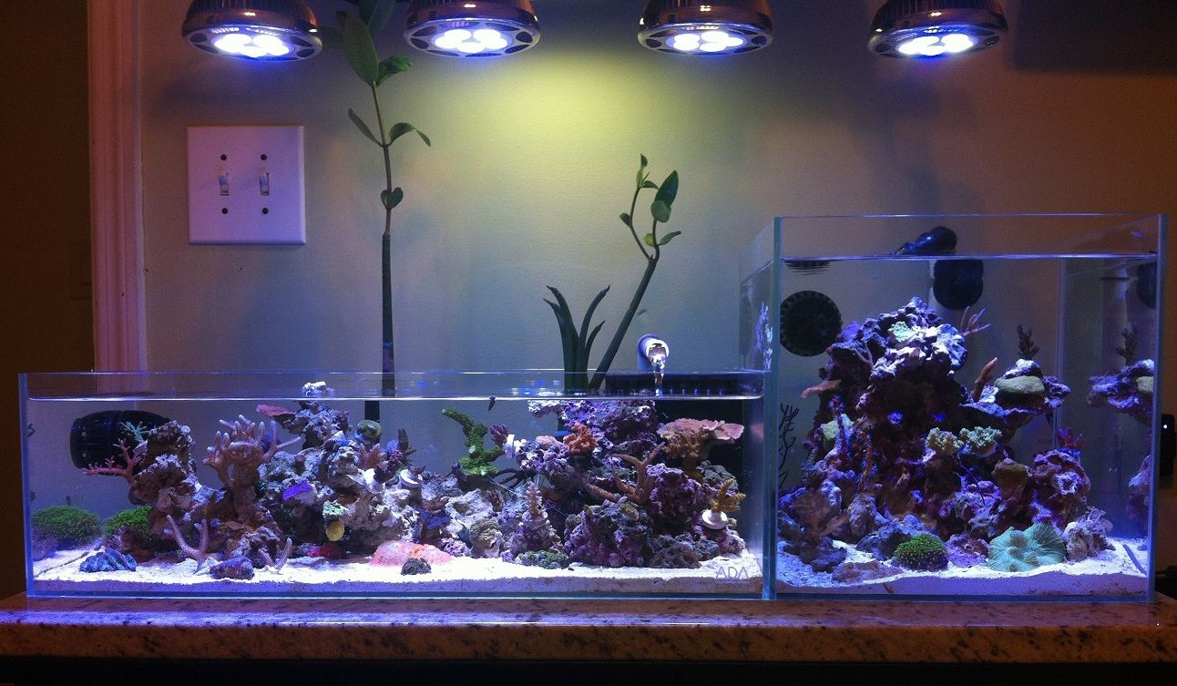 Jonny 39 s ada 2 tank reef concept tankspiration for Ada fish tank