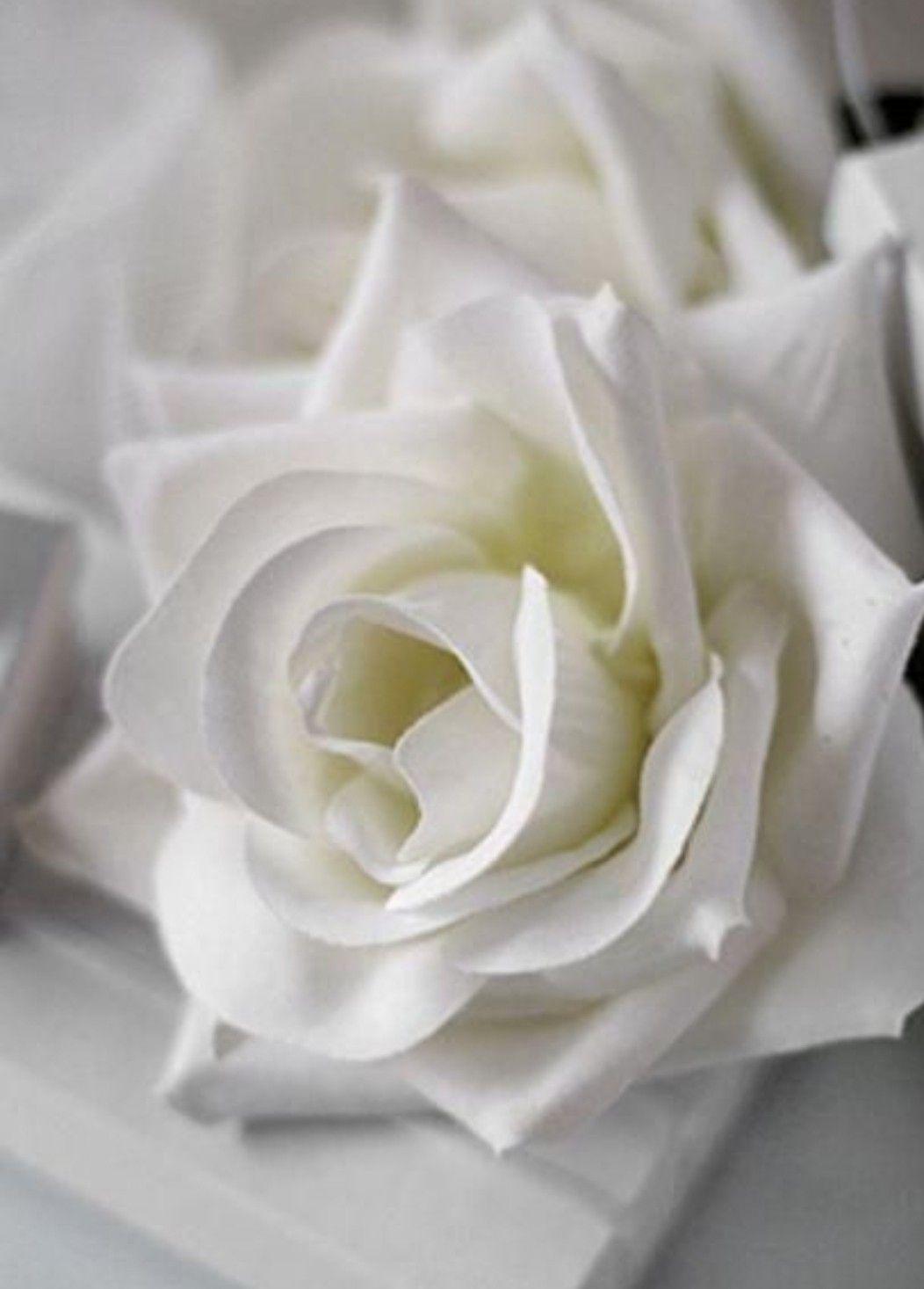 صبــــــاح الخــــير يارب أزل عنا هذة الغمة وأكشفها برحمتك وكرمك ومتعنا بنعمة الأمن والأمان ولا تهلكنا ب White Roses Beautiful Flowers Beautiful Roses