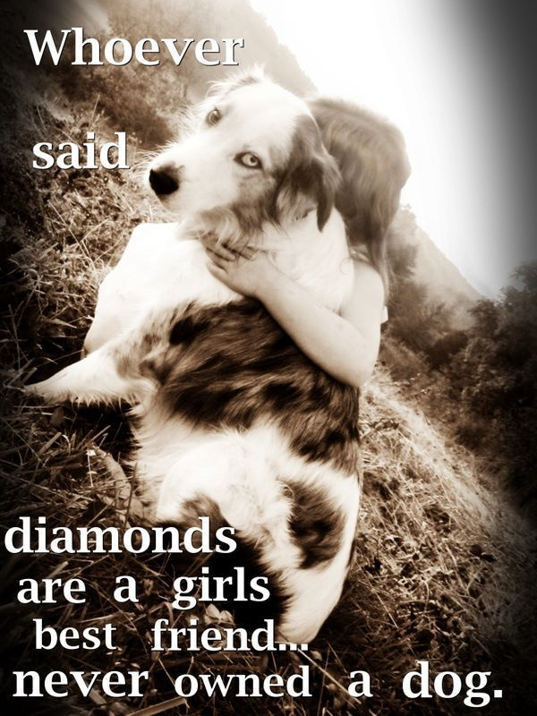 Whoever Said Diamonds Are A Girls Best Friend Dogs Dogs Dog