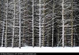 imatges de l'hivern - Cerca amb Google