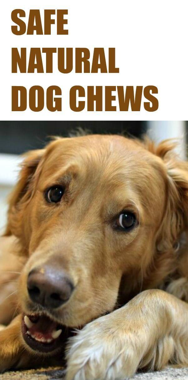 Jumbo 6 Bully Sticks 2 Ct Raw Paws Pet Bully Sticks Dogs Dog Health Tips