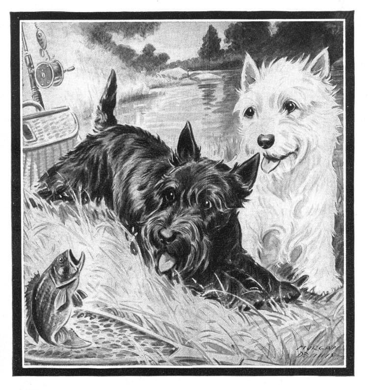 Pin By Karen Roberts On Scotties Scottie Art Black And White