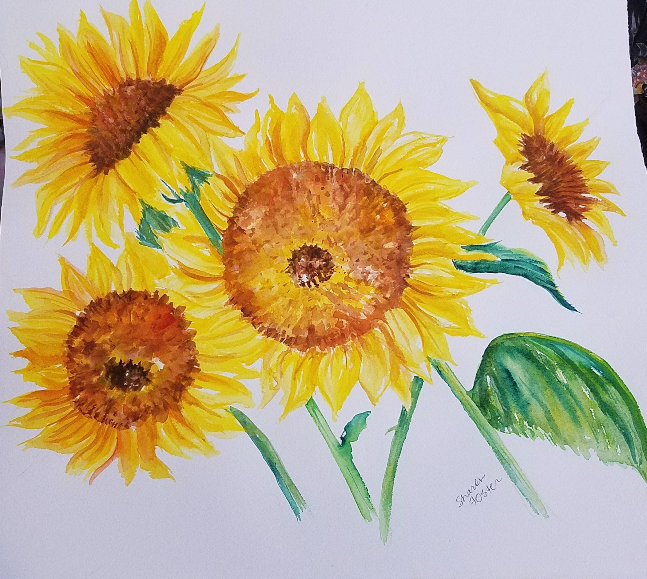 Sunflowers Watercolors Paintings Original 16 x 15 sunflowers ...