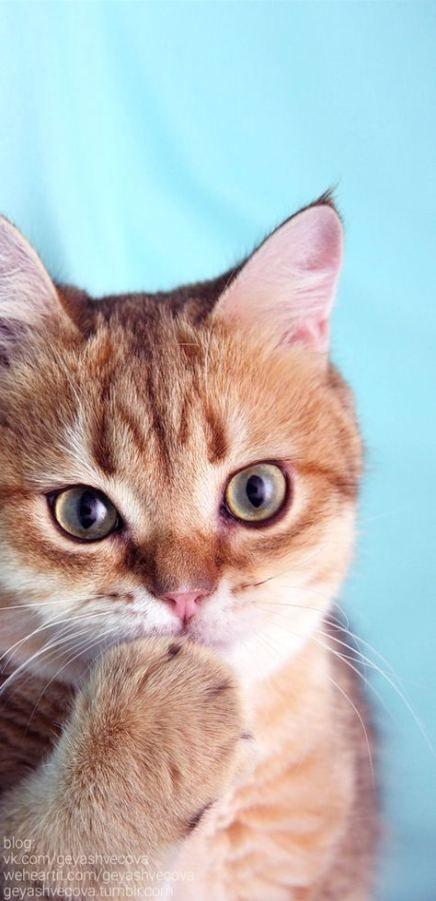 Photo of Katzen Hintergrund iPhone Tiere 29+ besten Ideen – – #albinoanimal #amazinganimal …