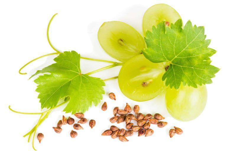 Cure tumorali più efficaci grazie ai semi dell'uva. Lo studio italiano