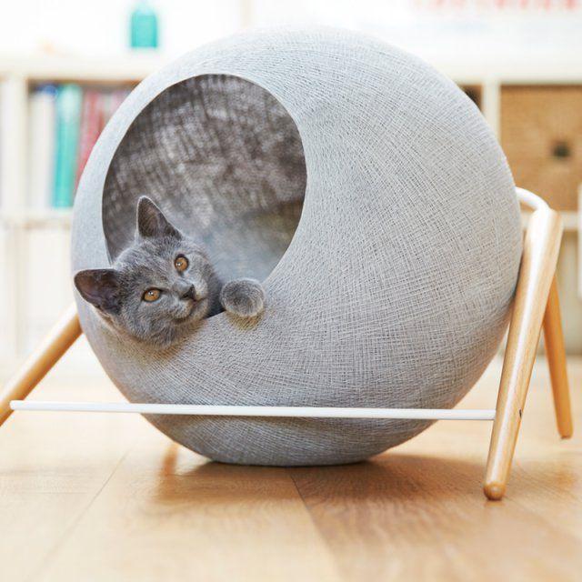 jouet chat design