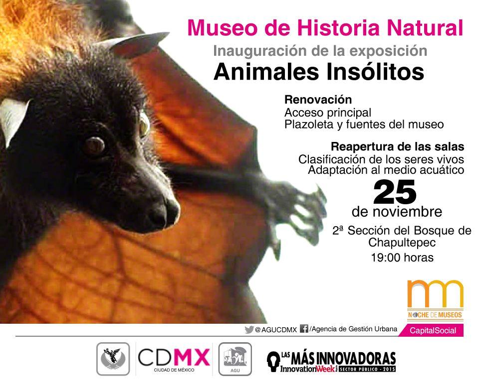 Asista a la inauguración Animales Insólitos en el @MHNCA_CDMX a las 19:00 hrs. #NocheDeMuseos