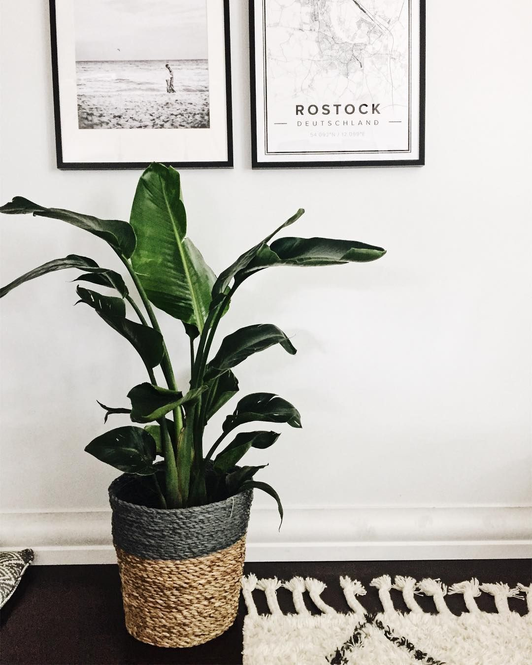 Pin von Vanshey We auf Plants | Pflanzen zimmer, Wohnen ...