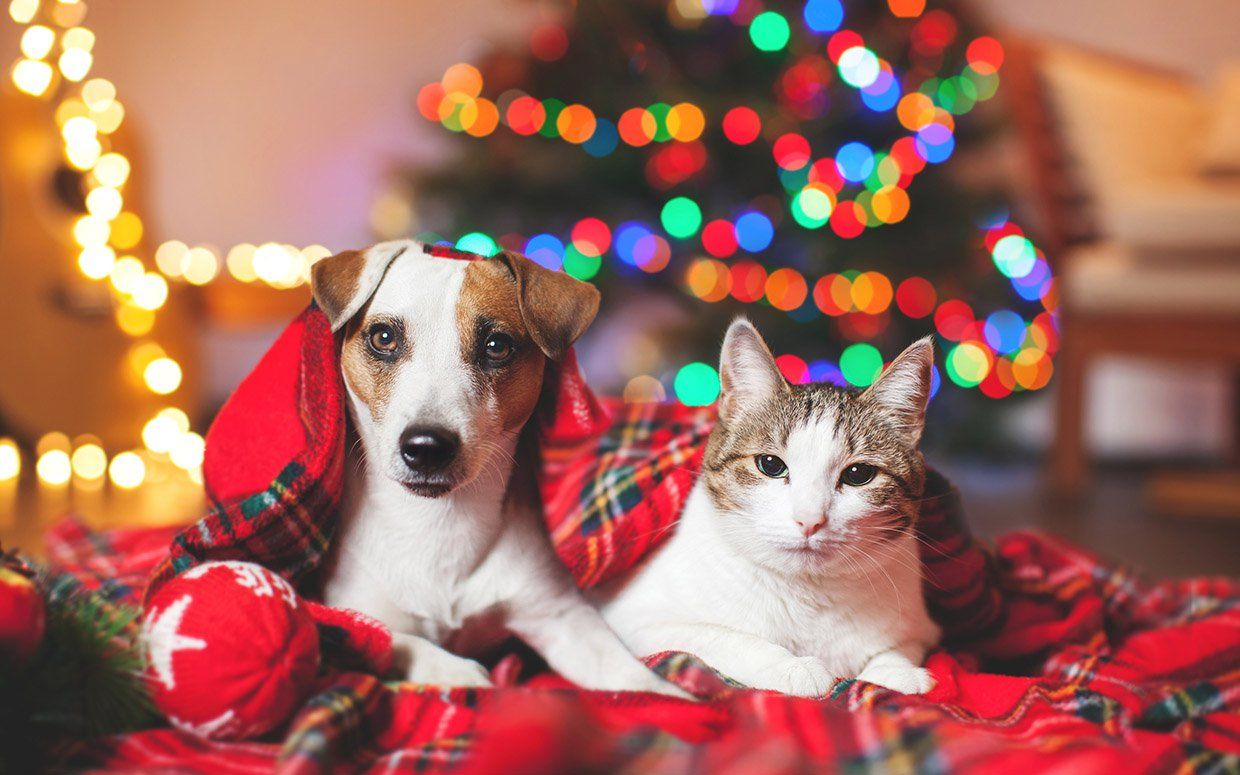 12 Gifts That Dogs And Cats Will Love With Images Christmas