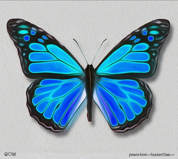 Viceroy Monarch Butterfly Painted Style Teal Blues Bright Vivid On Gallery Quality Canvas Art Options Peac Butterfly Painting Butterfly Art Teal Painting
