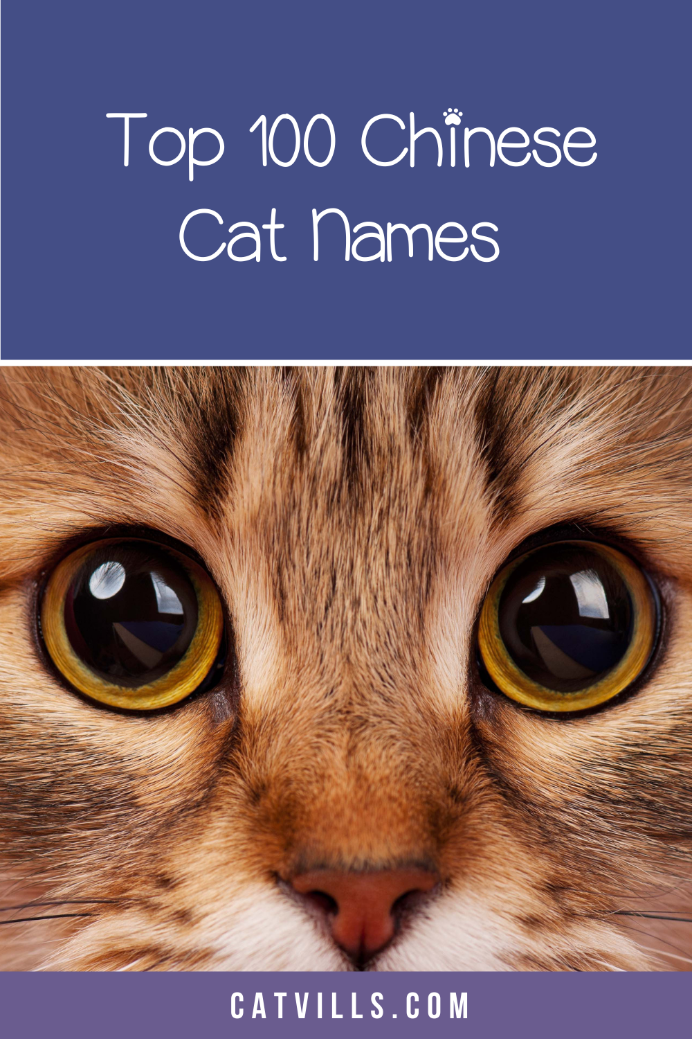 100 Exceptional Chinese Cat Names For Your New Kitten Catvills In 2020 Cat Names Cute Boy Names Orange Cats