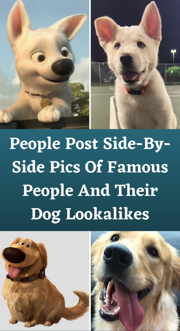 Side By Side Pictures Of Dogs And People