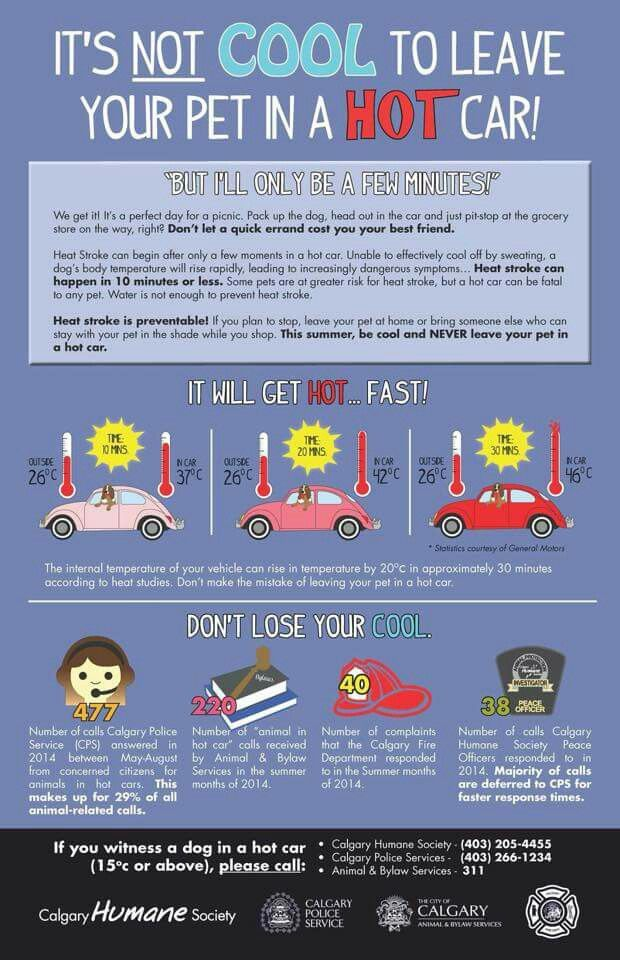 Do Not Leave A Pet In A Hot Car With Images Pets Cat