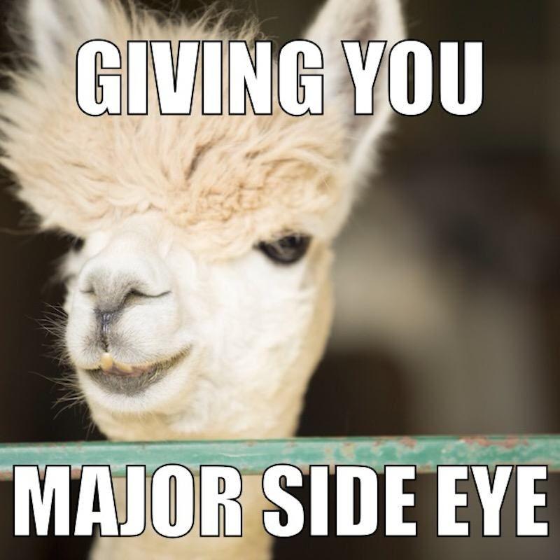 These Alpaca Memes Will Make You Feel Warm And Fuzzy Funny Animals Alpaca My Bags Alpaca
