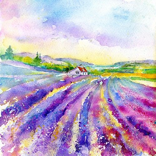 Lavender Field Print By Sheila Gill Greeting Cards Gifts Fine Art Prints Canvas Art Painting Acrylic Watercolor Flowers Paintings Small Canvas Art