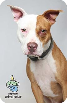 Pin on tennessee adoptables