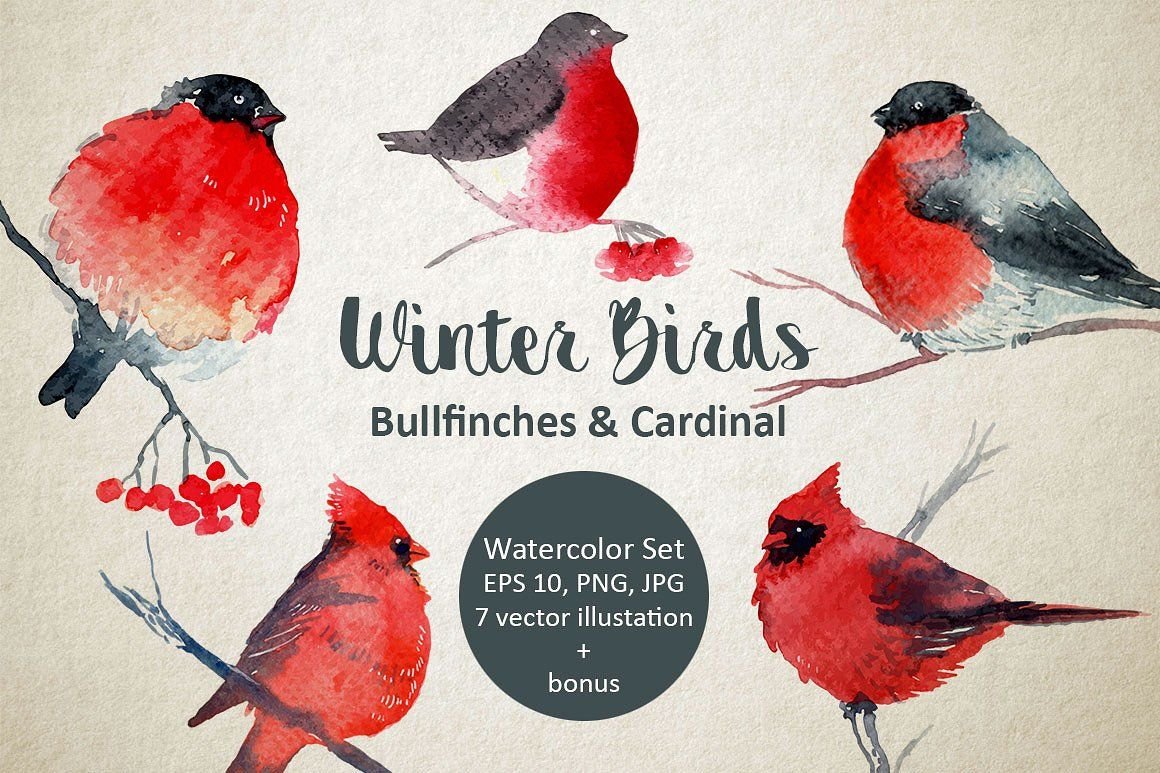 Winter Birds Bullfinches