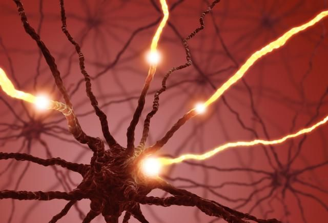 15+ What You Should Know About the Peripheral Nervous System