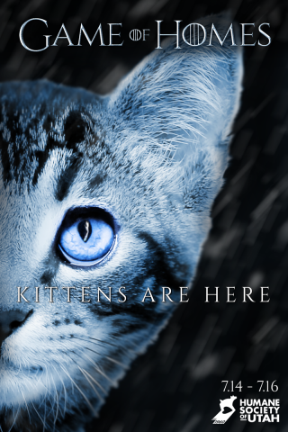Game Of Homes With Images Kitten Adoption Humane Society Cat Adoption