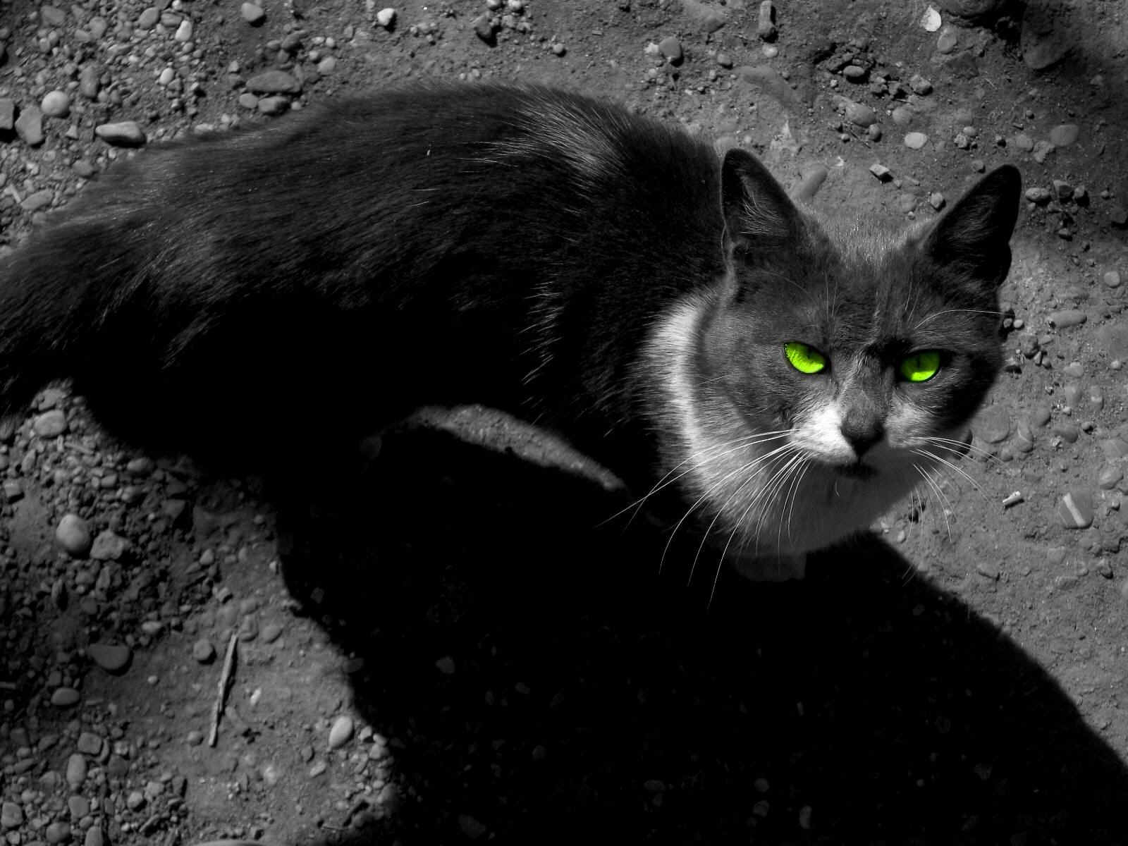 hd warrior cats image | sharovarka | pinterest | warrior cats