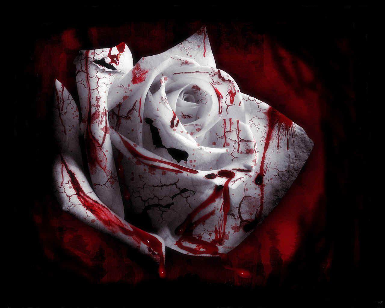 dark angel love | Bleeding Love « Broken Records